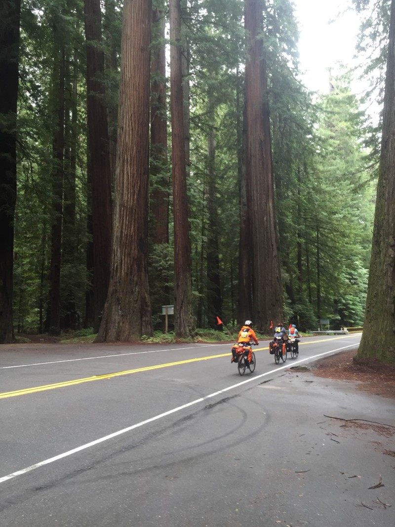 PC1B  -Avenue of the Giants